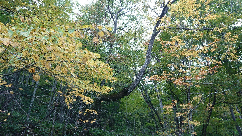 秋の源流コース🍂_180703_0013