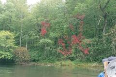 秋の源流コース🍂_180703_0024