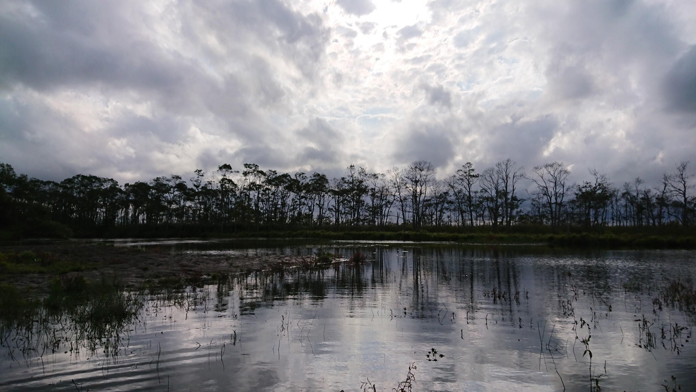 湿原半日コース🌟_180703_0008