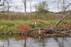 湿原半日コース🌟_180703_0006