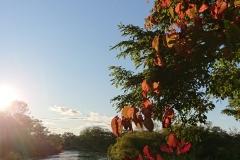 湿原半日コース🌟_180703_0010