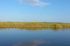 湿原半日コース🌟_180703_0013